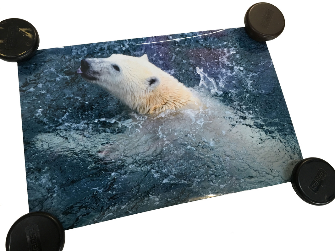 Le Frame Shoppe's Blog | Polar Bear Challenge Before