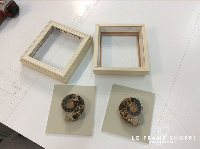 Le Frame Shoppe Blog | FEATURED PROJECT TWO AMMONITES